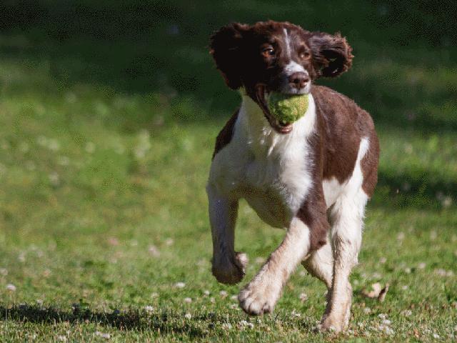 Abington PA 19001 Dog Walking & Pet Sitting Services
