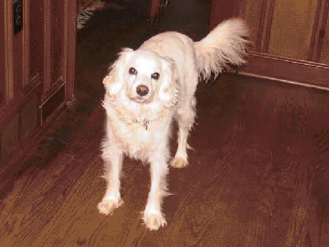 Flourtown PA 19031 Dog Walking & Pet Sitting Services