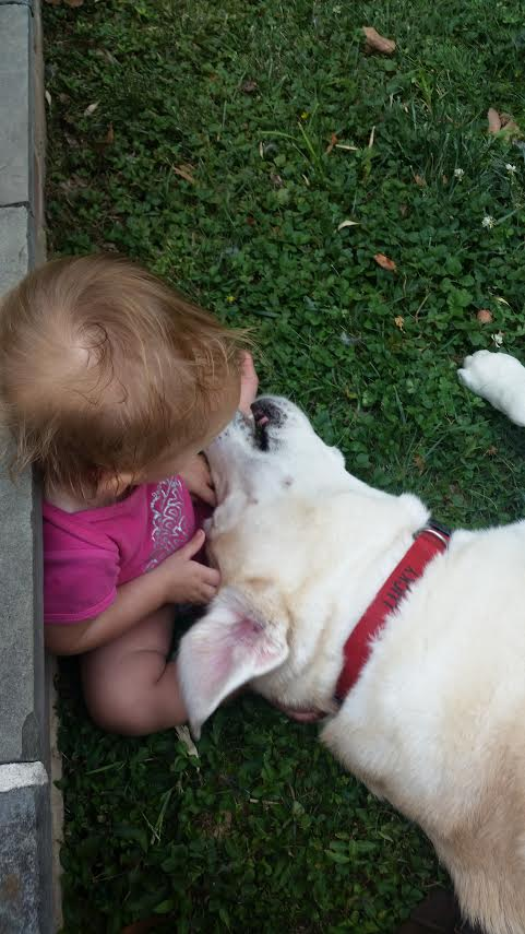 Mt Airy PA 19119 Dog Walking & Pet Sitting Services
