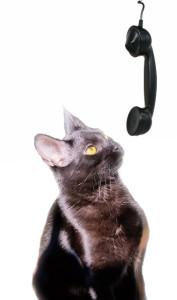 cat-sitting-glenside-pa-19038