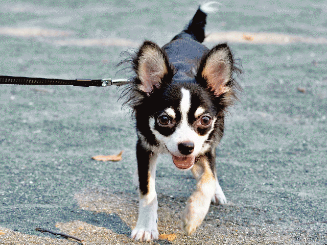 Jenkintown PA and Rydal PA 19046 Dog Walker
