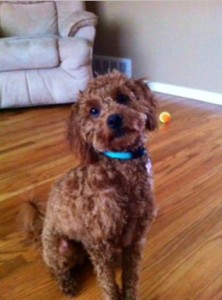 ginny-glenside- 19038-furry-buddies-pet-sitting-dog-walking